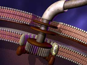 bakteriell-flagellum