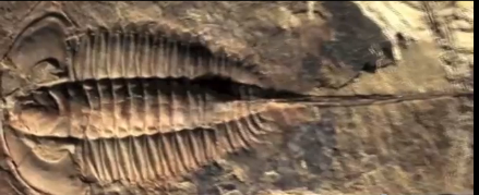 (Bilder av fossilavtrykk ved siden av fra traileren til: Darwins Doubt)