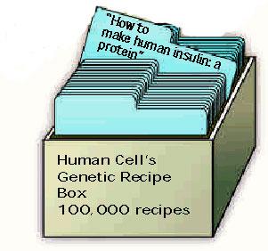menneskelig DNA