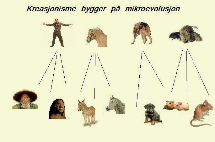 mikro-evolusjon