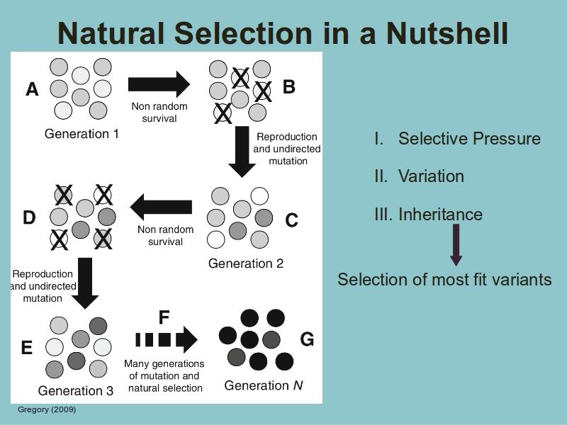 naturlig seleksjon