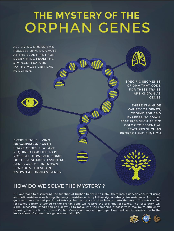 orfan-gener