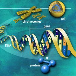 oversikt-celle-protein