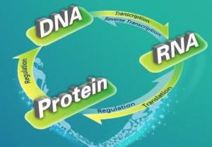 smh-DNA-RNA-protein