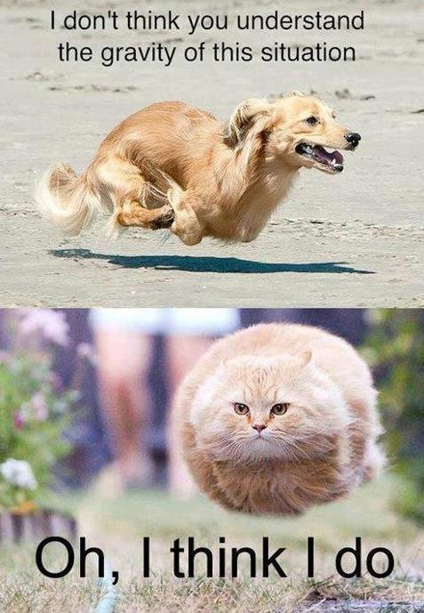 hund-katt